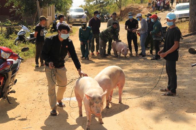Cả làng kéo nhau lên UBND xã khênh heo về ăn Tết - Ảnh 2.