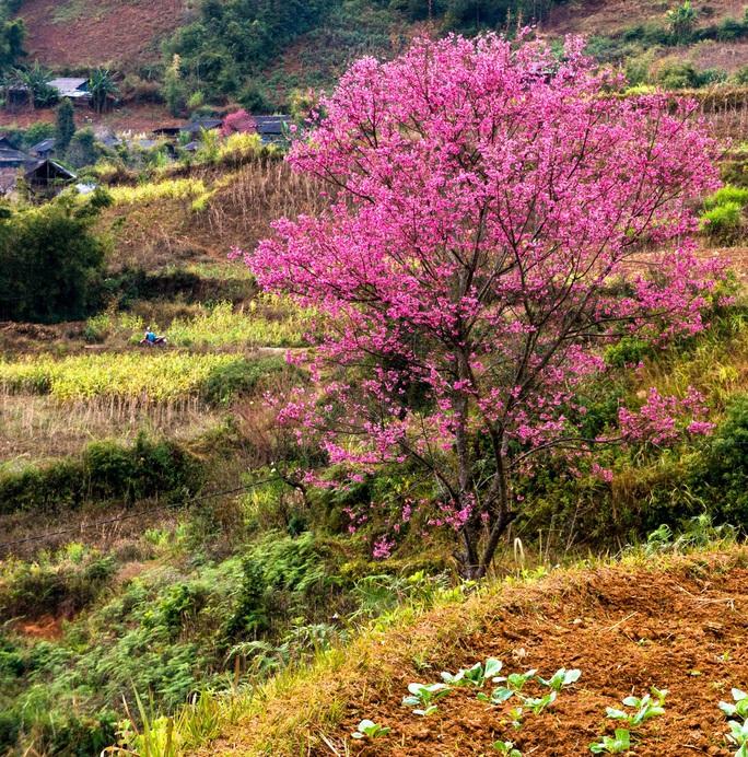 Làm báo cùng Báo Người Lao Động: Lạc bước giữa miền hoa Xuân Tây Bắc - Ảnh 8.