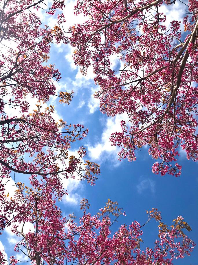 Làm báo cùng Báo Người Lao Động: Lạc bước giữa miền hoa Xuân Tây Bắc - Ảnh 7.