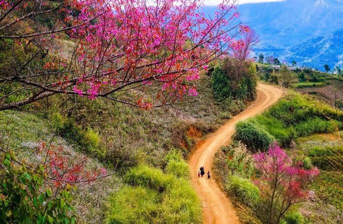 Làm báo cùng Báo Người Lao Động: Lạc bước giữa miền hoa Xuân Tây Bắc - Ảnh 1.