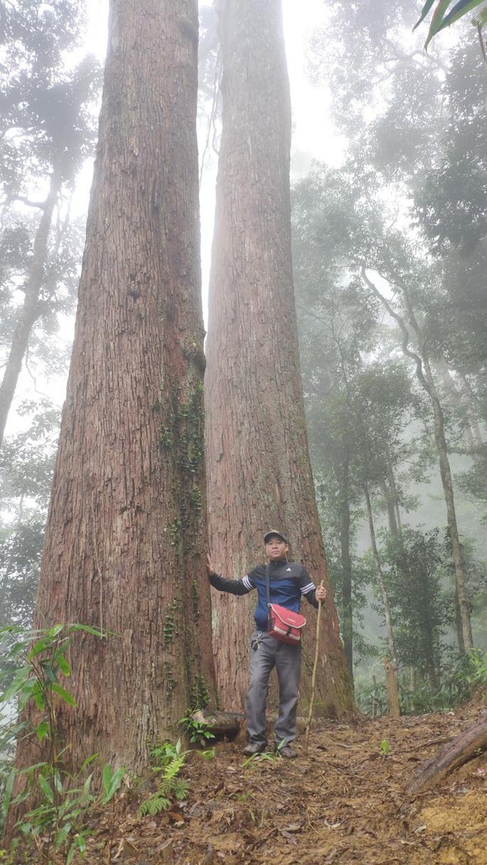 Ngắm rừng sa mu, pơ mu hơn 1.000 năm tuổi giữa đại ngàn - Ảnh 20.