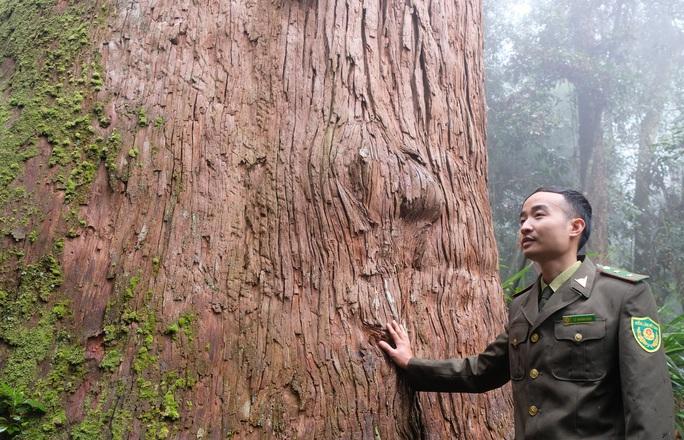 Ngắm rừng sa mu, pơ mu hơn 1.000 năm tuổi giữa đại ngàn - Ảnh 16.