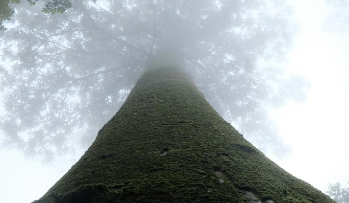 Ngắm rừng sa mu, pơ mu hơn 1.000 năm tuổi giữa đại ngàn - Ảnh 13.