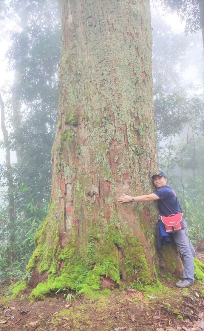 Ngắm rừng sa mu, pơ mu hơn 1.000 năm tuổi giữa đại ngàn - Ảnh 10.