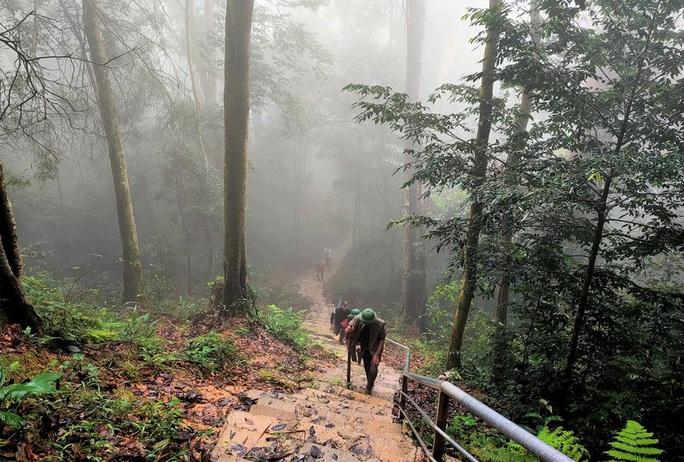 Ngắm rừng sa mu, pơ mu hơn 1.000 năm tuổi giữa đại ngàn - Ảnh 4.