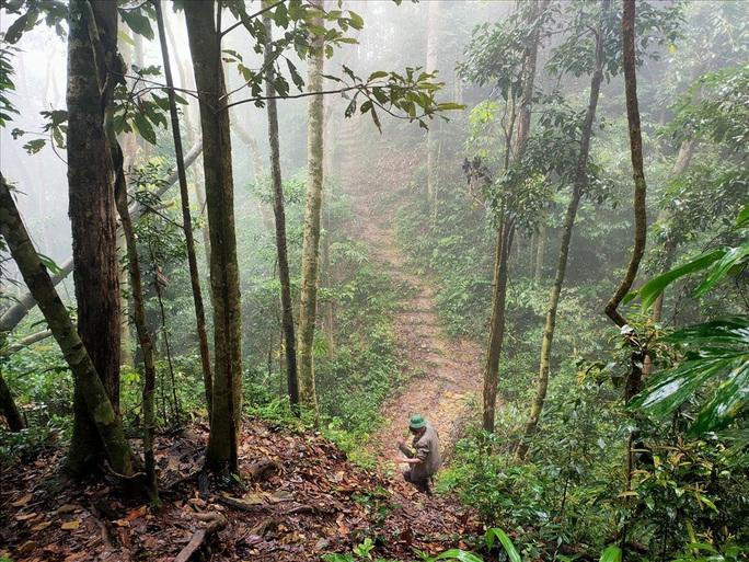 Ngắm rừng sa mu, pơ mu hơn 1.000 năm tuổi giữa đại ngàn - Ảnh 3.