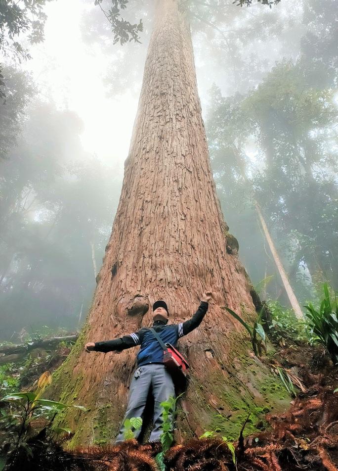 Ngắm rừng sa mu, pơ mu hơn 1.000 năm tuổi giữa đại ngàn - Ảnh 2.