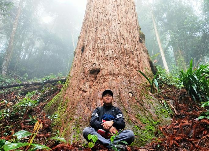 Ngắm rừng sa mu, pơ mu hơn 1.000 năm tuổi giữa đại ngàn - Ảnh 12.