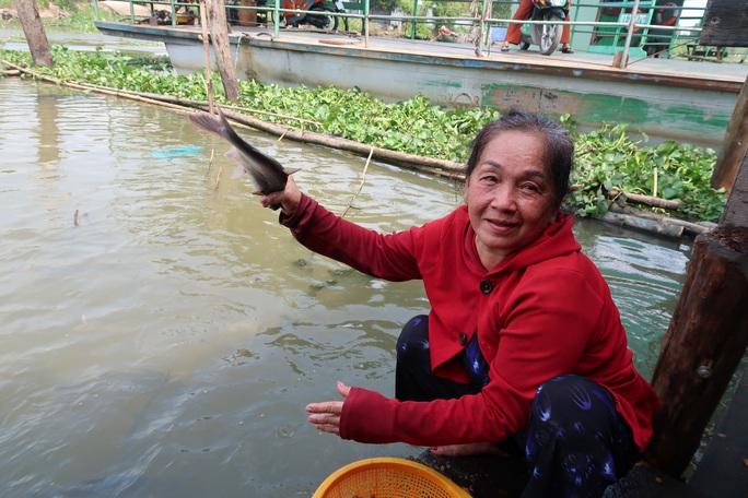 CLIP: Ngỡ ngàng với hàng ngàn con cá cư ngụ ở một bến sông - Ảnh 3.