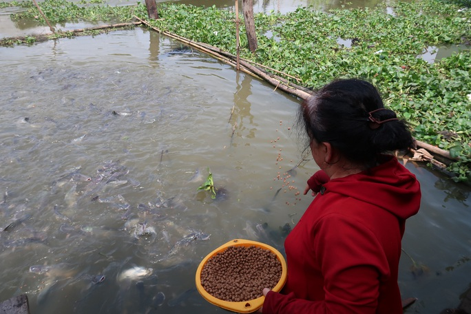 CLIP: Ngỡ ngàng với hàng ngàn con cá cư ngụ ở một bến sông - Ảnh 4.