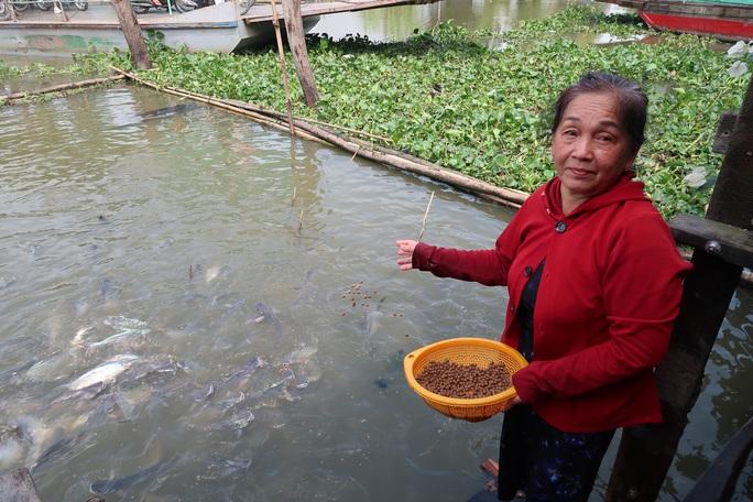 CLIP: Ngỡ ngàng với hàng ngàn con cá cư ngụ ở một bến sông - Ảnh 5.