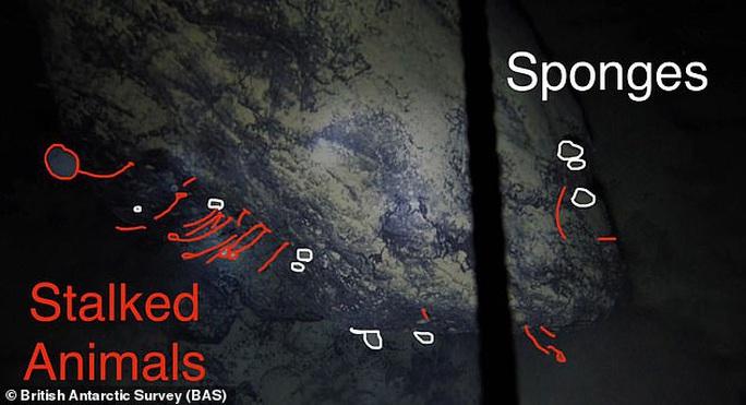 Sốc: Sinh vật lạ dưới mộ băng 900 mét, sống không cần thức ăn, ánh sáng - Ảnh 2.