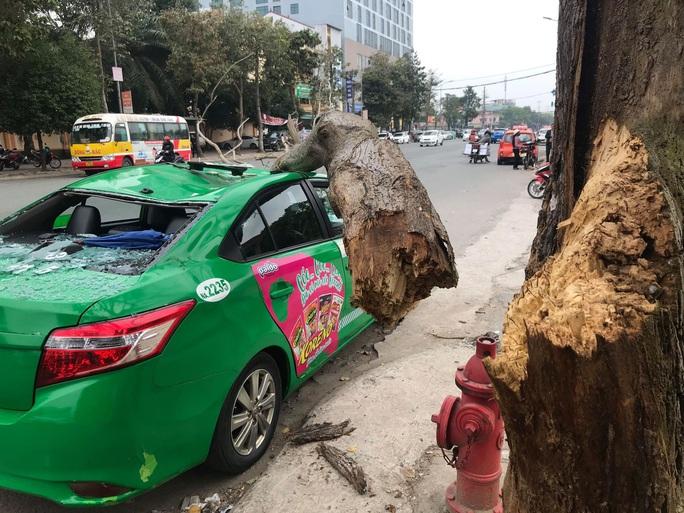 Nam tài xế và khách thoát chết hi hữu khi bị cây xanh gãy đè bẹp xe taxi - Ảnh 1.