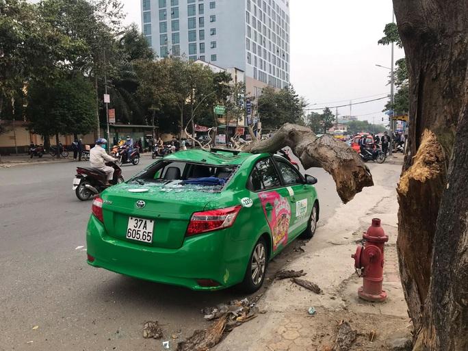 Nam tài xế và khách thoát chết hi hữu khi bị cây xanh gãy đè bẹp xe taxi - Ảnh 3.