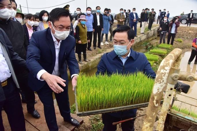 Bí thư Vương Đình Huệ xuống ruộng cấy lúa cùng bà con - Ảnh 1.