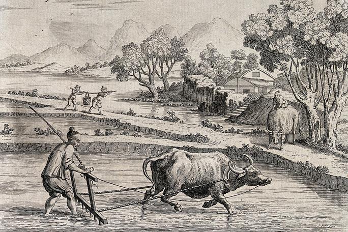 Con trâu: Vật tổ trong thế giới cổ đại - Ảnh 1.