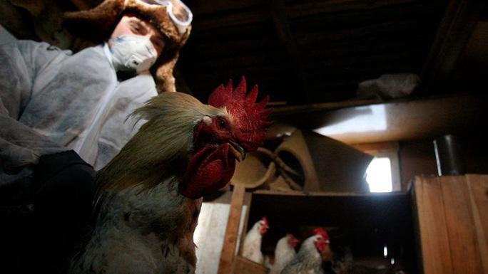 Nga phát hiện loại cúm mới lây từ động vật sang người - H5N8 - Ảnh 1.