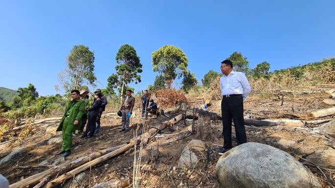 Lâm Đồng tái xuất tình trạng phá rừng phòng hộ, lấn chiếm đất - Ảnh 6.