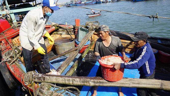 Ngư dân Bình Định trúng đậm ruốc biển - Ảnh 2.