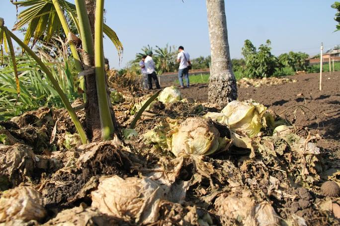 Nông dân nhổ bỏ hàng trăm tấn rau củ vì giá thấp, không người mua - Ảnh 2.