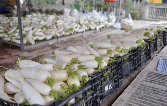 Cận cảnh người dân Hà Nội nhổ bỏ hàng trăm tấn củ cải vì không bán được  - Ảnh 17.