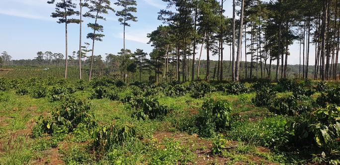 Lâm Đồng: Manh động ken gốc, đốt cây và đầu độc rừng còn đe dọa người dân phản ánh - Ảnh 6.