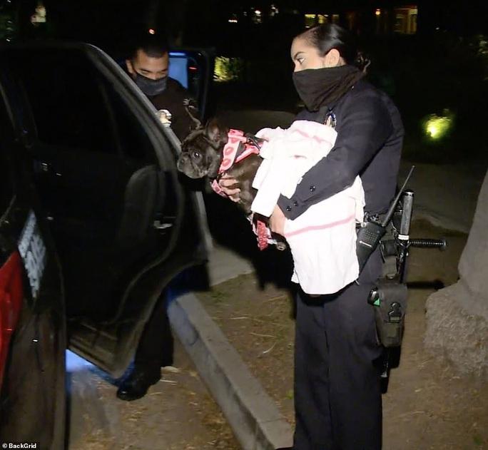 """Chó cưng an toàn sau khi Lady Gaga treo thưởng """"khủng"""" - Ảnh 4."""