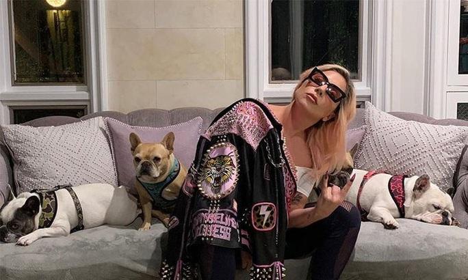 """Chó cưng an toàn sau khi Lady Gaga treo thưởng """"khủng"""" - Ảnh 1."""