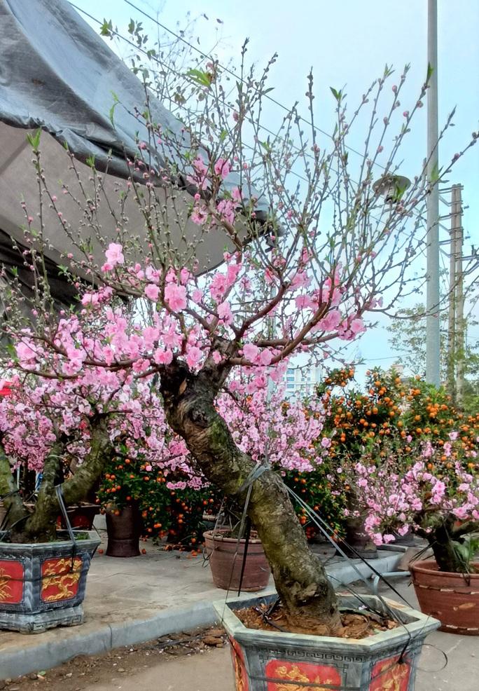 Gian hàng bán hoa đào độc lạ ở TP Thanh Hóa - Ảnh 10.