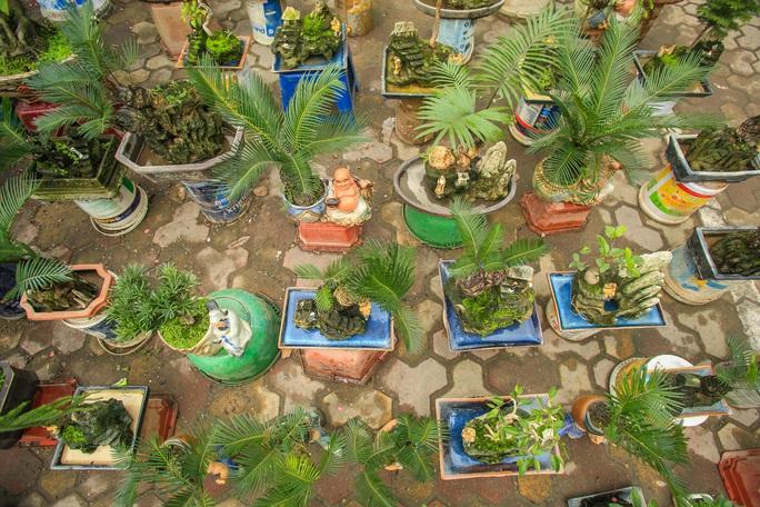 CLIP: Vạn tuế Bonsai hàng chục triệu đồng hút khách mua - Ảnh 3.
