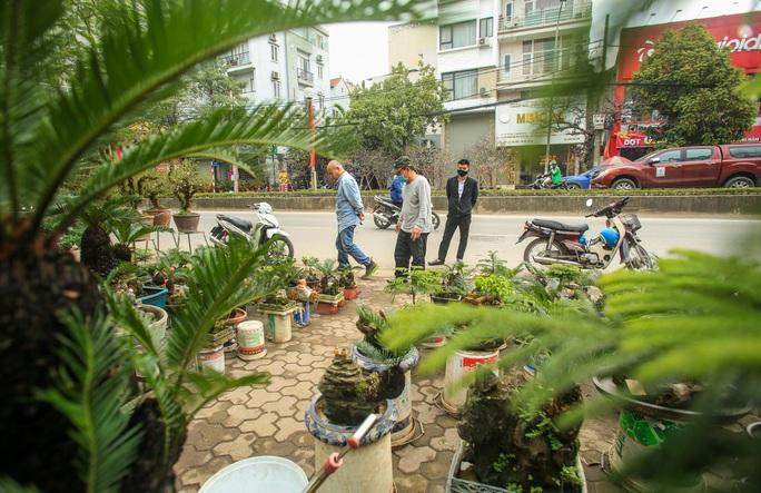 CLIP: Vạn tuế Bonsai hàng chục triệu đồng hút khách mua - Ảnh 5.