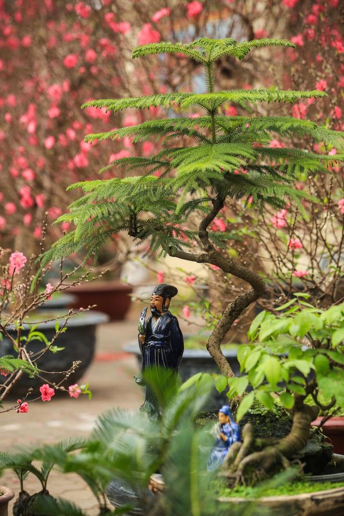 CLIP: Vạn tuế Bonsai hàng chục triệu đồng hút khách mua - Ảnh 17.