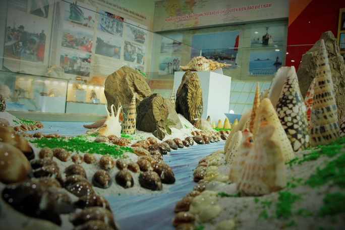Độc lạ bộ sưu tập vỏ ốc ở Đà Nẵng - Ảnh 5.