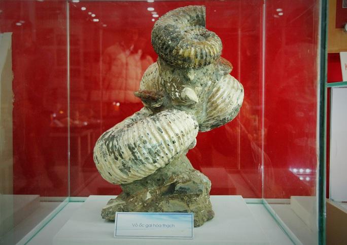Độc lạ bộ sưu tập vỏ ốc ở Đà Nẵng - Ảnh 8.
