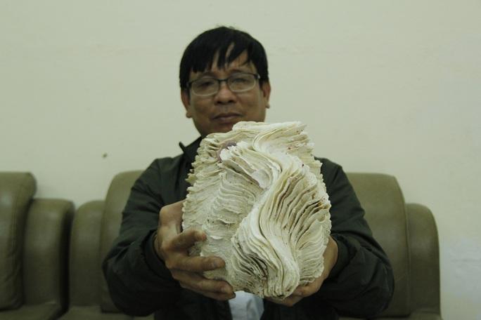 Độc lạ bộ sưu tập vỏ ốc ở Đà Nẵng - Ảnh 2.