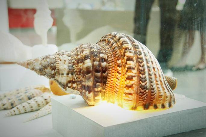 Độc lạ bộ sưu tập vỏ ốc ở Đà Nẵng - Ảnh 13.