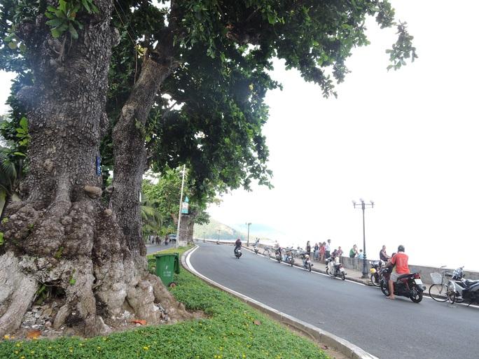 (Bài xuân online) Ngắm vẻ đẹp vượt thời gian của hàng cây di sản ở Côn Đảo - Ảnh 1.