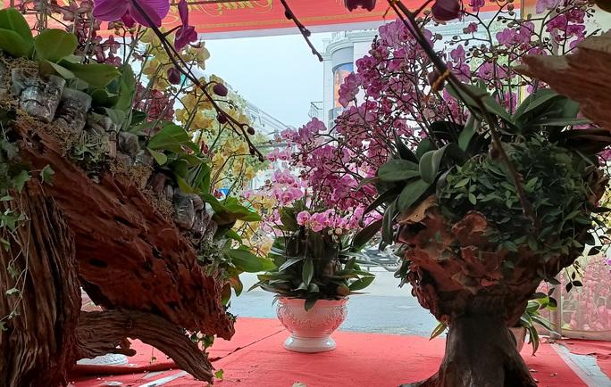 Những chậu hoa lan bằng gỗ lạ mắt ở chợ Tết - Ảnh 6.