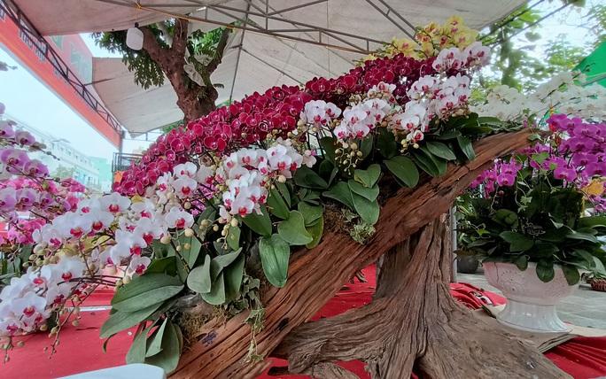 Những chậu hoa lan bằng gỗ lạ mắt ở chợ Tết - Ảnh 5.