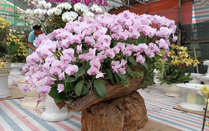 Những chậu hoa lan bằng gỗ lạ mắt ở chợ Tết - Ảnh 3.