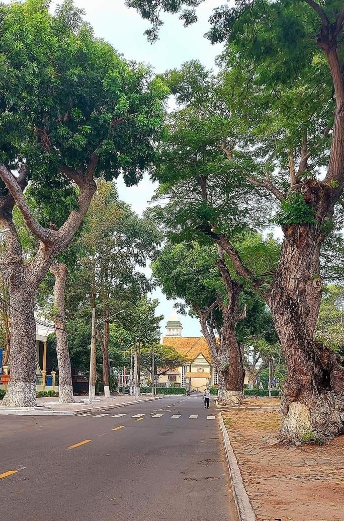Người dân Vũng Tàu tiếc nối nhìn hàng cây cổ thụ bị chặt hạ - Ảnh 4.