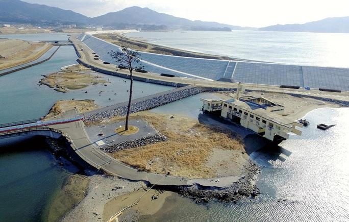 Thảm hoạ Nhật Bản: Cây thông thần kỳ 10 năm trước bây giờ ra sao? - Ảnh 4.