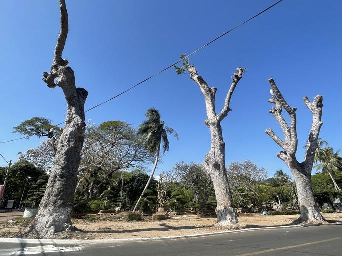 Người dân Vũng Tàu tiếc nối nhìn hàng cây cổ thụ bị chặt hạ - Ảnh 3.
