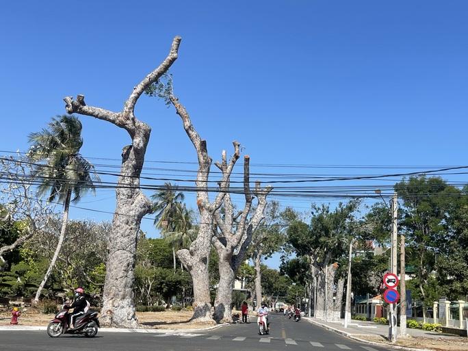 Người dân Vũng Tàu tiếc nối nhìn hàng cây cổ thụ bị chặt hạ - Ảnh 1.