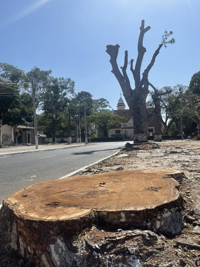 Người dân Vũng Tàu tiếc nối nhìn hàng cây cổ thụ bị chặt hạ - Ảnh 2.