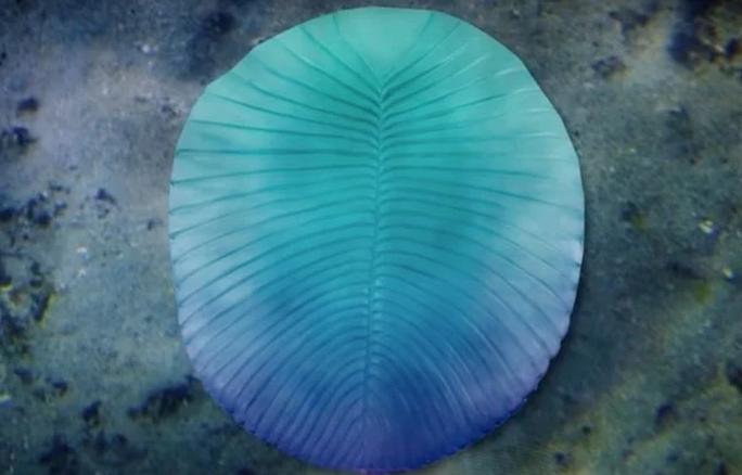 Sinh vật không đầu nửa tỉ tuổi mang đặc điểm tương đồng… con người - Ảnh 1.