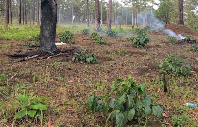 Rừng bị tàn phá lấn chiếm, huyện kiểm kê chỉ có 2 cây… bị tác động đã lâu! - Ảnh 10.