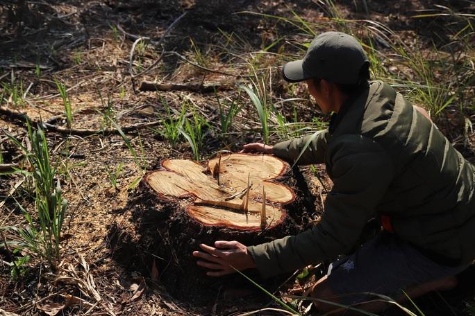 Rừng bị tàn phá lấn chiếm, huyện kiểm kê chỉ có 2 cây… bị tác động đã lâu! - Ảnh 4.