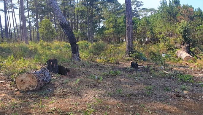 Rừng bị tàn phá lấn chiếm, huyện kiểm kê chỉ có 2 cây… bị tác động đã lâu! - Ảnh 8.