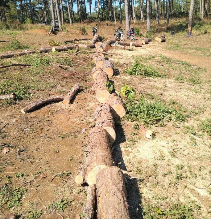 Rừng bị tàn phá lấn chiếm, huyện kiểm kê chỉ có 2 cây… bị tác động đã lâu! - Ảnh 6.